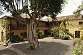 La Mantanza, yard with tree of restaurant La Cuadra de San Diego, Tenerife, Canary Islands, Spain