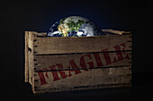 Packing Case Transporting The Earth In Transit, Illustration Of The Fragility Of The Planet, Photo Exhibition 'Fragile Earth' Presented By The Association 'L'Effet Colibri' France