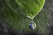 The Earth As A Raindrop Falling Onto A Leaf In The Rain, Illustration Of Life On The Planet, Photo Exhibition 'Fragile Earth' Presented By The Association 'L'Effet Colibri' France