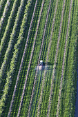 Aerial photo, rows of apple trees in blossom, tractor spraying, Lower Saxony, Germany