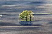 Luftbild, frisches Grün Laubbaum, Insel im frisch gepflügten Acker, Ackerfurchen, Niedersachsen, Deutschland