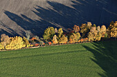 Aerial view of a hedge with autumn coloured trees and bushes, ploughed field and green crops, Lower Saxony, Germany