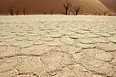 Comb shaped clay soil with dead trees in background, Deadvlei, Sossusvlei, Namib Naukluft National Park, Namib desert, Namib, Namibia