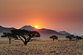 Sunset over savannah with savannah grass and camel-thorn trees, Namib Rand Nature Reserve, Namib desert, Namib, Namibia
