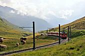 Train Matterhorn-Gotthard-Bahn near Oberalppass, Andermatt, Canton of Uri, Switzerland