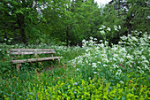 Bench between wildflower meadow and trees at Lac de Bouchet, Haute Loire, Southern France, Europe