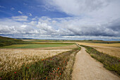 Path between fields, Burgos, Castile and Leon, Spain