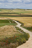 Pilgrims on a path amidst fields, Province of Burgos, Old Castile, Castile-Leon, Castilla y Leon, Northern Spain, Spain, Europe