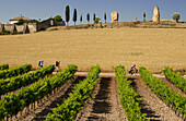 Pilgrims at a vineyard, Cirauqui, Province of Navarra, Northern Spain, Spain, Europe