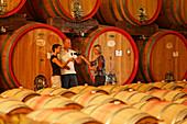 Anstoßen, Weinprobe Bardolino, Weingut Zeni, Bardolino, Venetien, Italien