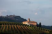 Alba, Background La Morra, Langhe, Piedmont, Italy