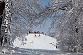 Indianapolis, Indiana - Children on a sledding hill in a city park © Jim West