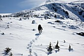 A winter hiker makes his way up the Air Line Trail in extreme weather conditions during the winter months in the White Mountains, New Hampshire USA