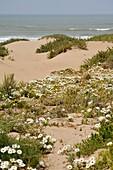 Souss-Massa National Park, Atlantic coast, Morocco, North Africa