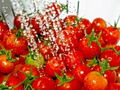 Ripe, red cherry tomatoes in white colander Sharp water droplets of water sprayed on them Close up Below camera Horizontal