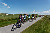 Cyclists near Ketelswarf, Hallig Langeness, North Sea, Schleswig-Holstein, Germany