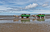 Journey over the mudflats towards Hallig Suedfall, Fuhlehoern on North Beach, Wadden sea, Schleswig-Holstein, Germany