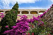 Mediterrane Pflanzen, Zypresse, Bougainvillea, Oleander, Lumio, Korsika, Frankreich, Europa