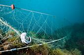 Lost Fishing Net over Reef, Cap de Creus, Costa Brava, Spain