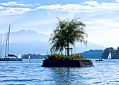 Small ssland with a Weeping Willow with the Kampenwand in the background, Chiemsee, Chiemgau, Northern Chalk Alps, Eastern Alps, European Alps, Upper Bavaria, Bavaria, Germany