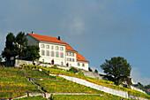 Farm house in vineyard, lake Geneva, Lavaux Vineyard Terraces, UNESCO World Heritage Site Lavaux Vineyard Terraces, Vaud, Switzerland, Europe