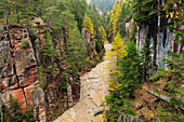 Conifer trees at canyon Bletterbachschlucht, UNESCO World Heritage Site Dolomites, South Tyrol, Italy, Europe