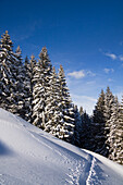 Winter scenery with snoeshoe track on Zwiesel Mountain, Alps near Bad Tölz, Upper Bavaria, Germany, Europe