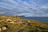 INGA NESS ORKNEY Coastal path west coastline seacliffs Hoy island south of Yesnaby