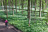 Female cyclist passing riparian forest with blooming wild garlic, Leipzig, Saxony, Germany