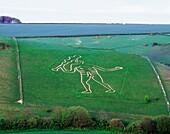 The Cerne Abbas Giant carved out of chalk hillside above Cerne Abbas village, Dorset, England Ancient phallic fertility symbol