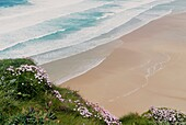 Waves roll onto clean deserted empty sandy summer beach from above Sea pinks flowers in foreground