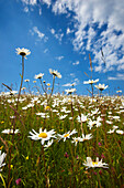 Wildflower meadow in summer, General, East Sussex, UK - England