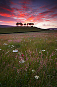 Scenery with wildflower meadow at dawn, Exmoor National Park, Somerset, UK - England