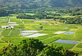 View over taro fields in Hanalei Valley, Kauai Island, Hawaii, USA