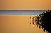 Achterwasser, Loddin, Usedom, Mecklenburg-Western Pomerania, Germany