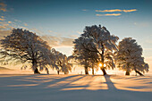 Snow-covered beech trees on mount Schauinsland, Freiburg im Breisgau, Black Forest, Baden-Wurttemberg, Germany