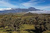 View from Col de Bellevue over Foret de Bebour and Piton de la Neige, La Reunion, Indian Ocean
