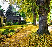Autumn in Residential Area, Portland, Oregon USA