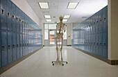 Skeleton in High School Hallway, Winston-Salem, NC, USA
