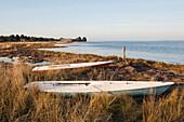 Small Sail Boats Along Tidal Grasses, Oysterville, Washington, USA