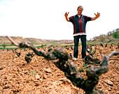 Grape vine, enologist showing full-grown size, Bodega Dominio de Atauta, Castile and León, Spain