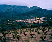 Vineyards of San Esteban de Valle, beneath the Massiv Oriental, Sierra de Gredos, Castile and Leon, Spain