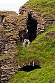 Findlater Castle, Aberdeenshire, Schottland
