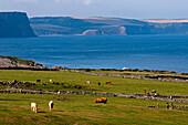 Küstenlandschaft nahe Rosehearty, Aberdeenshire, Schottland