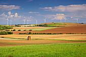 Landscape at Walbig, Agriculture, Eifel, North Rhine-Westfalia, Germany, Europe
