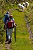 Hikers above Rowen, Snowdonia National Park, Wales, UK