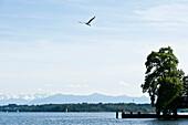 Blick über Starnberger See auf Alpenpanorama, Tutzing, Bayern, Deutschland