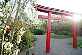 Japanese garden at a municipal park, Karlsruhe, Baden-Wuerttemberg, Germany, Europe