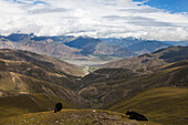 Yaks in the Transhimalaya Mountains near Lhasa, Tibet Autonomous Region, People's Republic of China