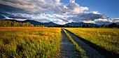Track at Kochelsee moor and view of Jochberg, Herzogstand and Heimgarten, Upper Bavaria, Germany, Europe